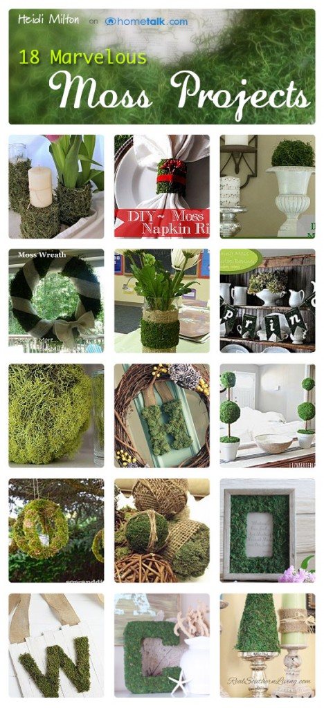 Hometalk Moss DIY projects